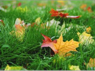 Осень! Состояние «Хозяйки» и праздник матушки Земли